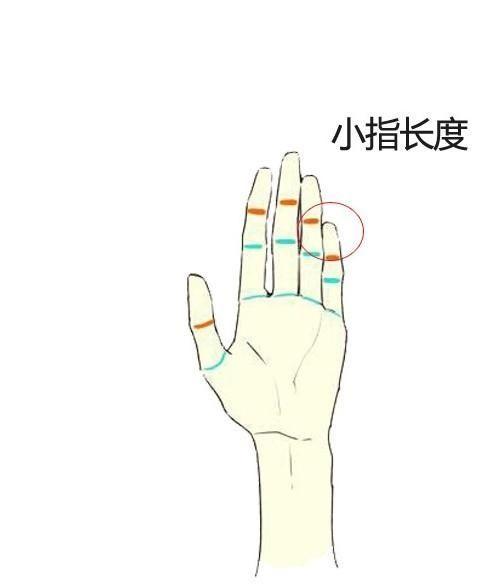 手指长度,看性格,知命运,简单易懂