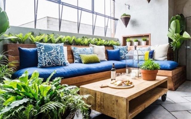阳台最应该养的植物,提升家居品味还能招好运气、阻隔不良气场
