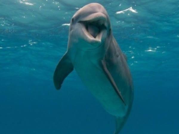 心理测试:4只海豚,哪只笑得最萌?测新年你能否财运亨通赚大钱
