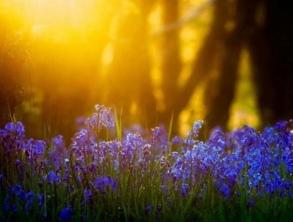 心理测试:哪个花仙子最善良?看你具备什么样的爱情魔力!